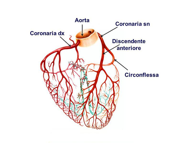 main session approccio anatomico o funzionale nella diagnosi e stratificazione prognostica della malattia coronarica